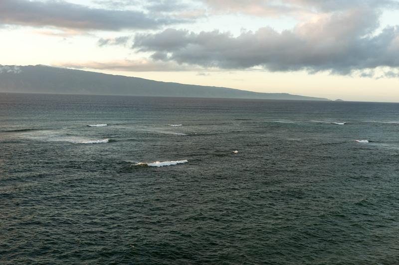 Whale watch in Maui A school of six