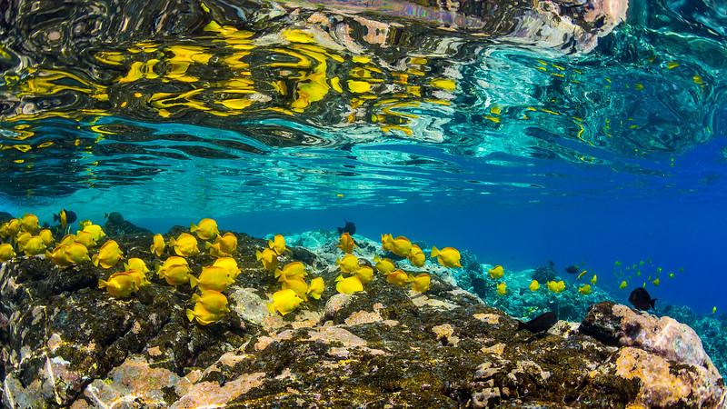 Kealakekua reef
