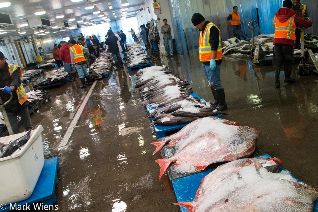 Honolulu seafood market