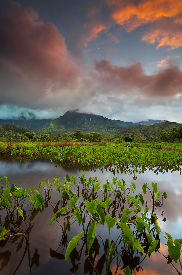 This taro field near Hanalei is planted and then flooded with water until the tubers are ready for harvest. I waited for a week for these conditions to appear. A big rain created 7 waterfalls (5 seen here and all seven in the image 'Water'), which only last a few hours. All I had to do here was wait for the breeze to calm down for 6 seconds and for the moon to pop out from behind the clouds.  I needed F22 despite the long resulting exposure time because I wanted the leaves to be close in front and for them to be in sharp focus.