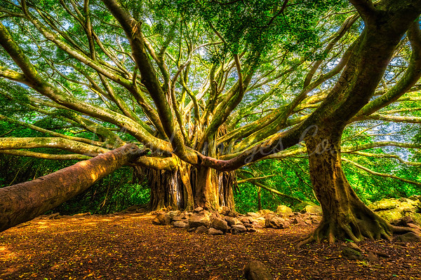 Hawaii Landscapes - Maui