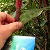 "Hawaii: Oahu's North Shore-""Kahuku Fruit Stand's Fuzzy Tree""?<br /> <a href=""https://youtu.be/K9Ye_INSXUk"">https://youtu.be/K9Ye_INSXUk</a>"