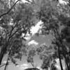 IMG_5253-good-rev_topaz buzsim_threshhold-hue blend