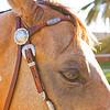 0m2q8674-tradewinds quarter horses-tradewinds pet suites-sandy van-waianae-oahu-hawaii-2010