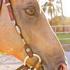 0m2q8673-tradewinds quarter horses-tradewinds pet suites-sandy van-waianae-oahu-hawaii-2010