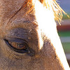 0m2q8671-tradewinds quarter horses-tradewinds pet suites-sandy van-waianae-oahu-hawaii-2010