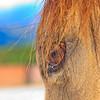 0m2q8678-tradewinds quarter horses-tradewinds pet suites-sandy van-waianae-oahu-hawaii-2010