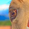 0m2q8680-tradewinds quarter horses-tradewinds pet suites-sandy van-waianae-oahu-hawaii-2010