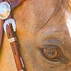 0m2q8676-tradewinds quarter horses-tradewinds pet suites-sandy van-waianae-oahu-hawaii-2010