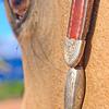 0m2q8682-tradewinds quarter horses-tradewinds pet suites-sandy van-waianae-oahu-hawaii-2010