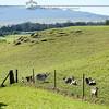 Goats - Our home with Mauna Kea View