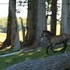Running filly
