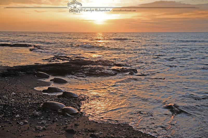 Puako Honu Sunset