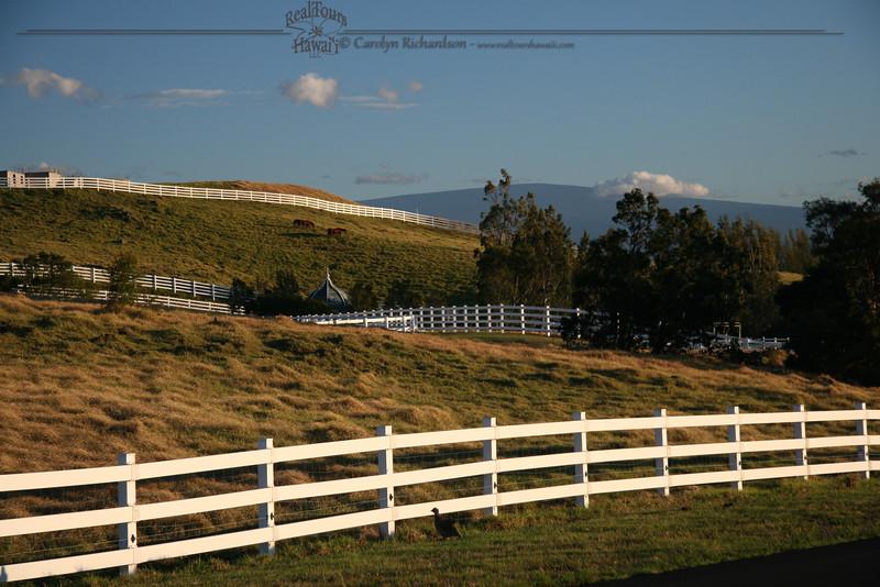 Kohala Ranch Upper Meadows
