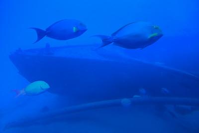 Reef Fish & Wreck
