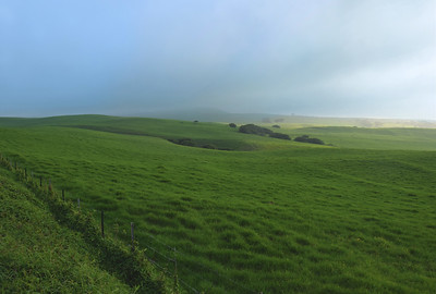 Kohala Green Pastures