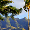 Palm trees with mountains in the background
