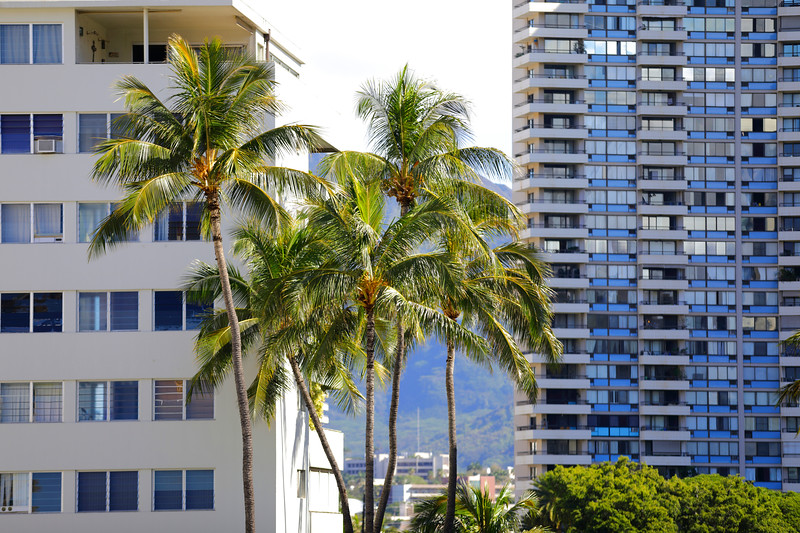 Palm trees and apartment buildings in Hawaii