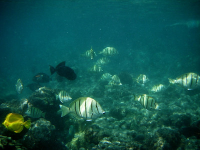 2010 hawaii - a first quick glance