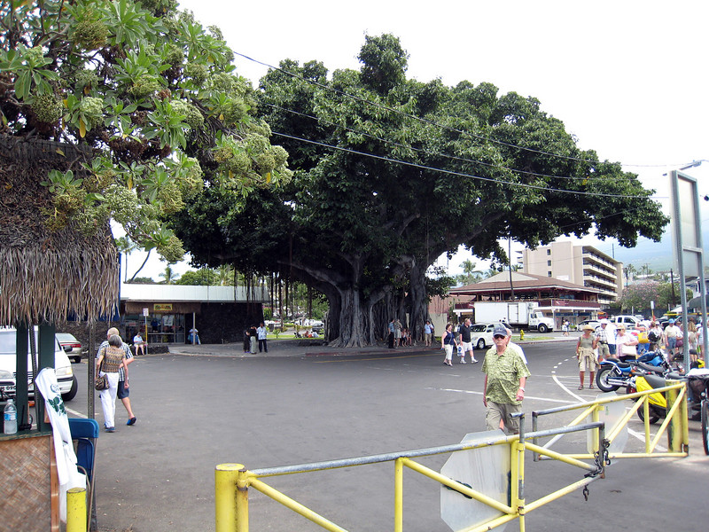 Tendered in Kona - Banyan Tree