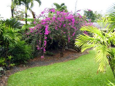 Hilo Flower Garden
