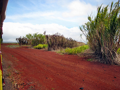 08 Dole Pineapple Plantation