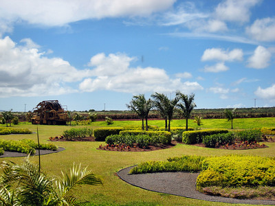24 Dole Pineapple Plantation