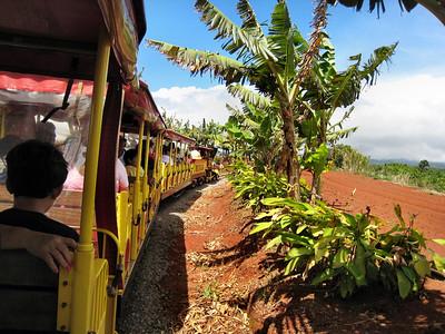 13 Dole Pineapple Plantation