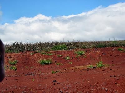 10 Dole Pineapple Plantation