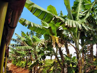 12 Dole Pineapple Plantation