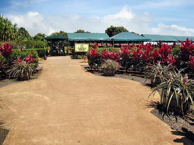 02 Dole Pineapple Plantation