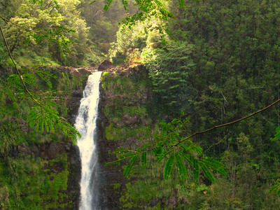 Akaka Falls - It's too big to fit in one photo.