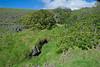 Greening of Waimea