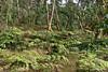 Waipio Forest Hike