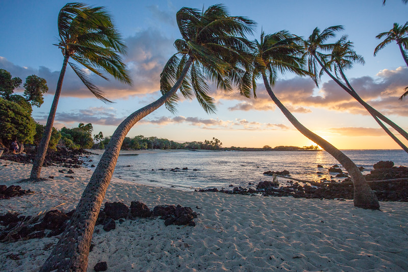 Palm Trees and a Secret Bay at Sunset
