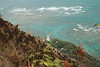 #DIA050310-22 View of lighthouse from summit of Diamond Head