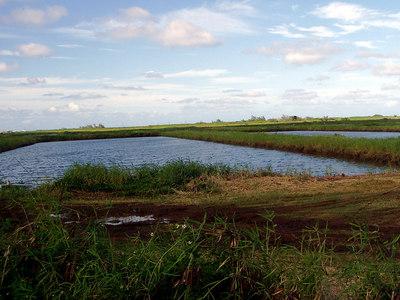 276  Shrimp Pond - North Shore