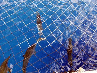 216   Wild Dolphin Watching Cruise
