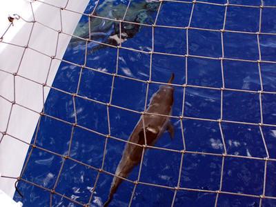 218   Wild Dolphin Watching Cruise