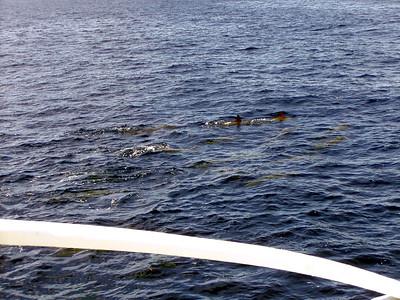 217   Wild Dolphin Watching Cruise