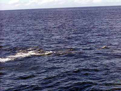 221   Wild Dolphin Watching Cruise