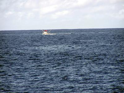 210   Wild Dolphin Watching Cruise