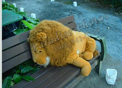 Lyin' Lion 071611 704
