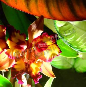 Orchid BotGar 071617 775