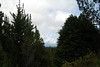Hosmer Grove is a pine tree forest area on the slopes of Haleakala #HAL2009-9