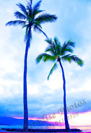 freaky Blue palms on North Shore Oahu