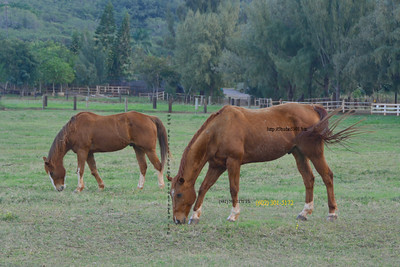 Two horses 012212 34