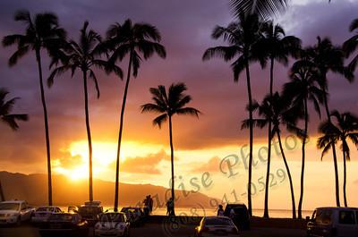 Palm Trees Sunset N  Shore 012212 nef ed137