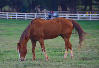 Horse 012212 28