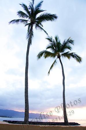 2 palm trees Haleiwa nef 012212 189